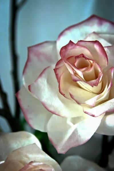 Estas flores de filtro de café são lindíssimas (Foto: fabartdiy.com)