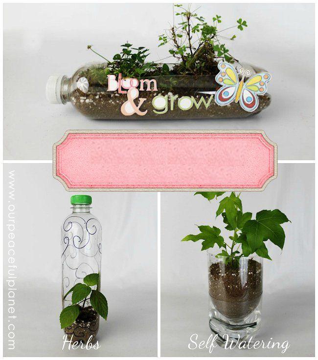 Conhecido Como Fazer Vasos de Plantas com Garrafa Pet XV58