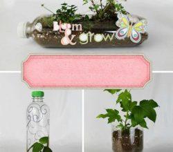Como Fazer Vasos de Plantas com Garrafa Pet