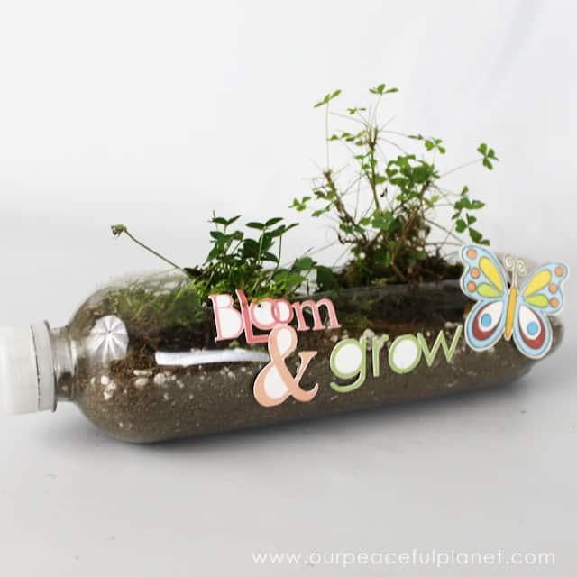 Passo a Passo de Vasos de Plantas com Garrafa Pet