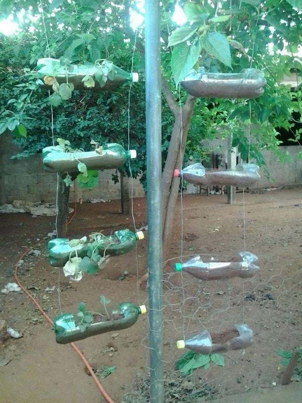 horta com garrafa pet e arame