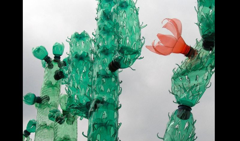 reciclagem de garrafa pet cacto