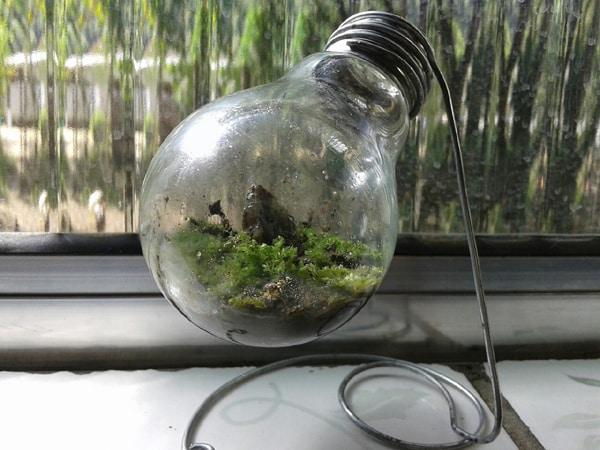 terrario na lampada simples