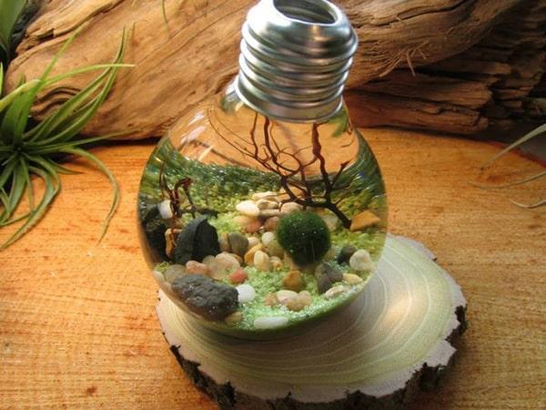 terrario na lampada no tronco