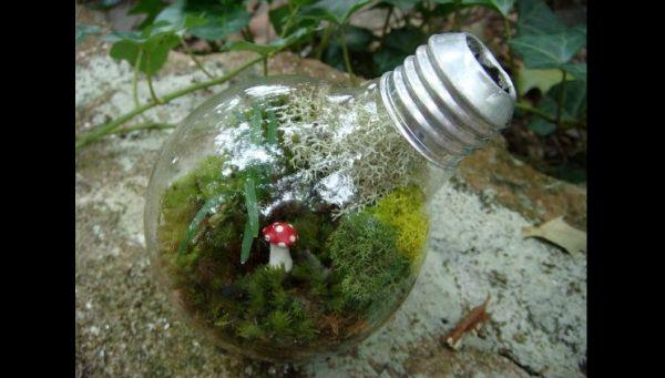 terrario na lampada com cogumelo