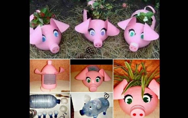 reciclagem de garrafa pet porco
