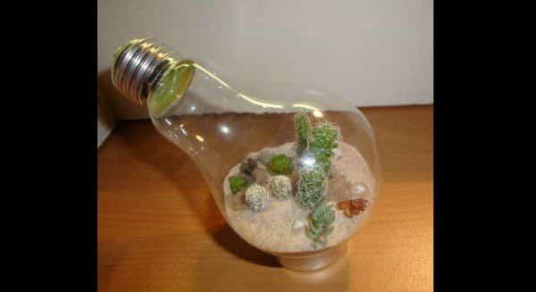terrario na lampada no suporte