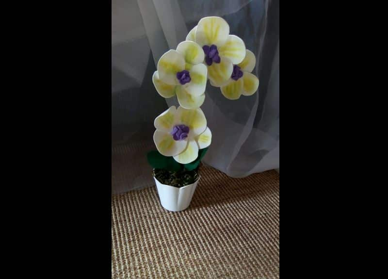 orquidea de eva