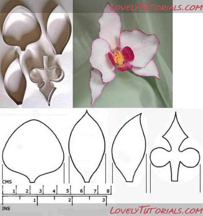 flor de eva orquidea