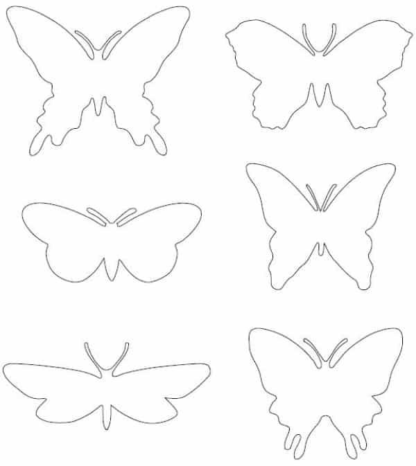 borboletas pequenas diferentes