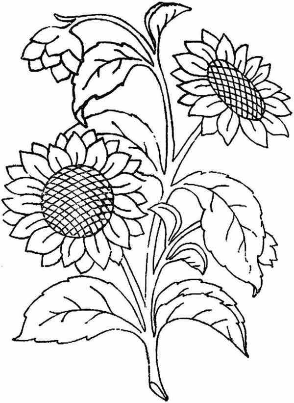 moldes de flores de tecido