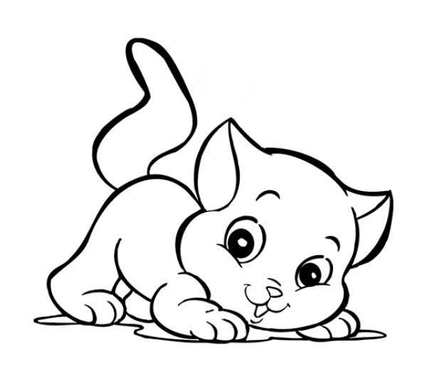 gato bebe para colorir