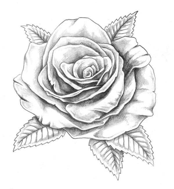 desenhos de rosas vermelhas