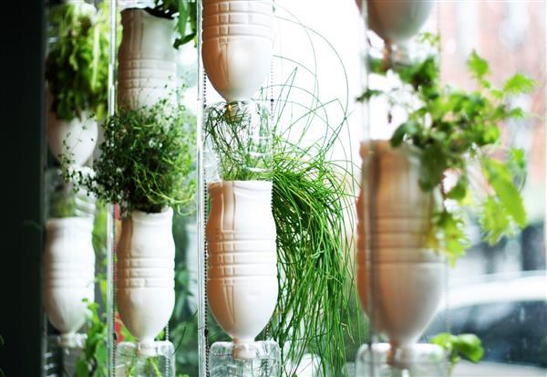 horta de garrafa pet