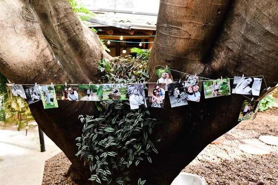 Varal de fotos na árvore
