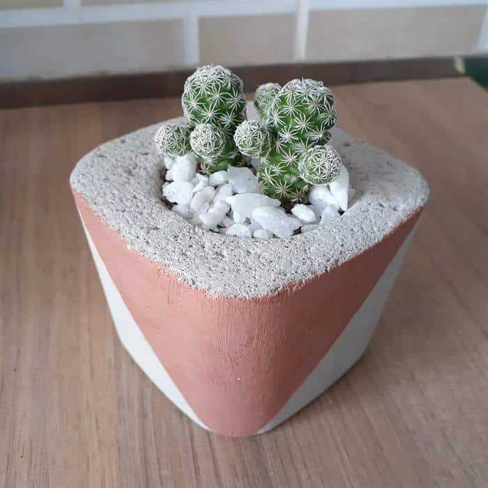 vaso de cimento pequeno para cactos