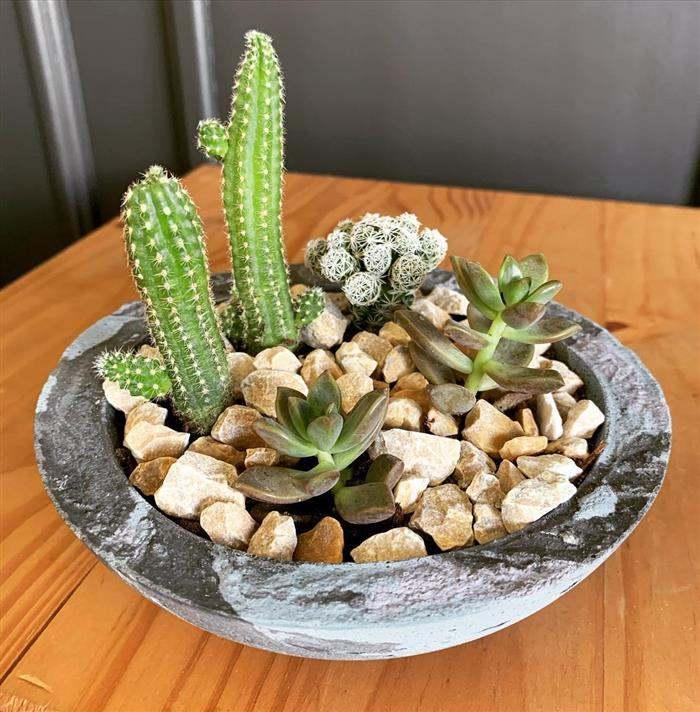 vaso grande para plantas pequenas
