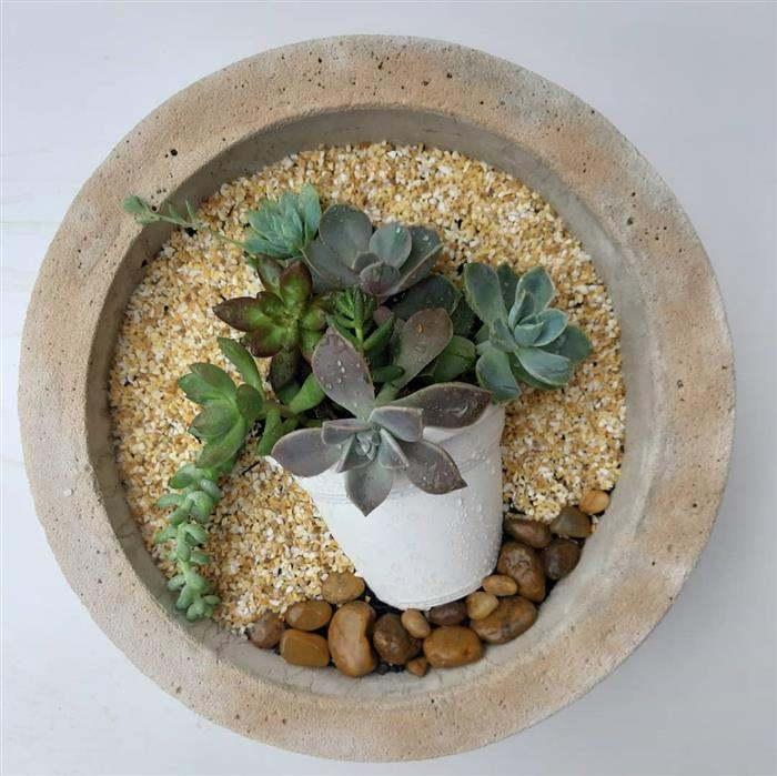 vaso para jardim de suculentas
